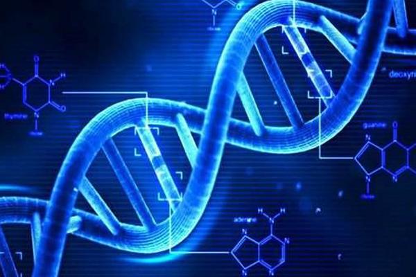DNA(脱氧核糖核酸)