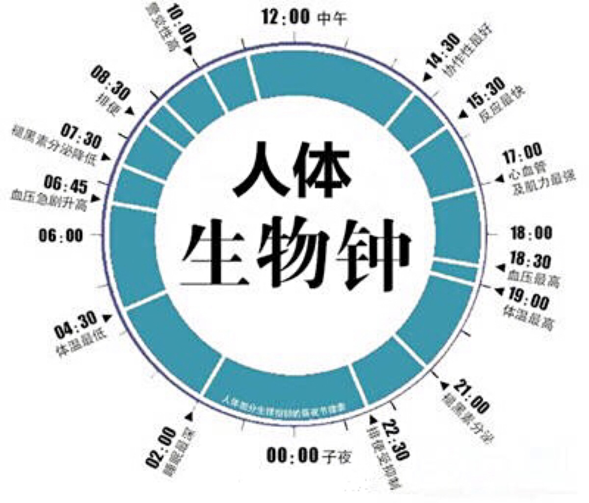 人体生物钟